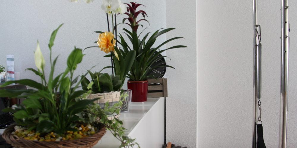 Flores Receción